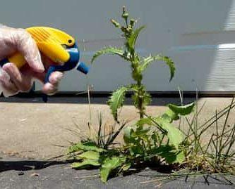 Cómo eliminar las malas hierbas